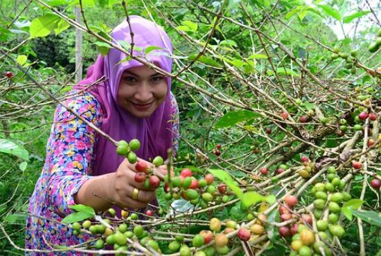 Fairtrade obchod